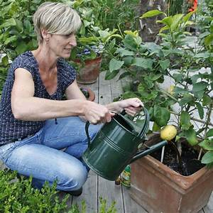 Dünger Für Zitronenbaum : ihr zitronenbaum verliert die bl tter die ursachen mein ~ Watch28wear.com Haus und Dekorationen