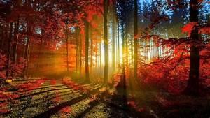 Schöne Herbstbilder Kostenlos : hintergrundbilder kostenlos herunterladen herbst genial ~ A.2002-acura-tl-radio.info Haus und Dekorationen
