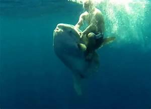Man Rides Giant Mola Mola like a Horse | Bass Boat ...