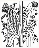 Corn Coloring Indian Field Plant Cornstalk Cornfield Stalk Drawing Stalks Vegetables Fruits рисунок кукуруза Printable Sheet Template Drawings Fields Kidsplaycolor sketch template