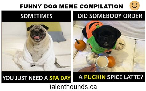 Meme Compilation - try not to laugh at this funny dog meme compilation video talent hounds
