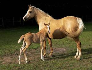 Alter-Real pict... Horse Breeds