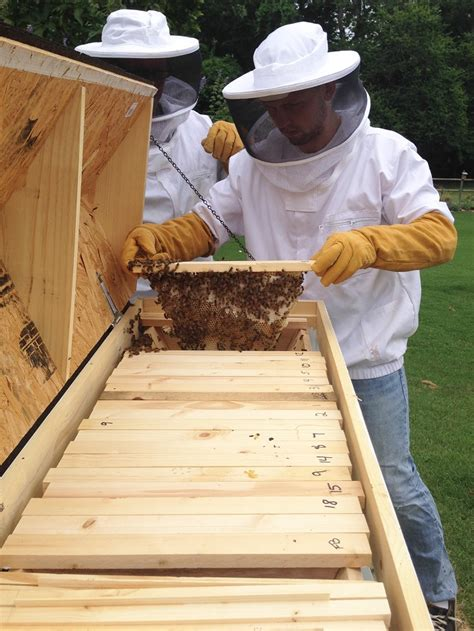 Top Bar Excluder - beekeeping 101 picking the best hive design for your