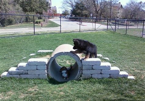 tunnel dog park pinterest