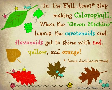 why do leaves change color in fall pin by oyler on the scientific