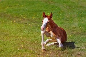 Newborn Baby Horses | www.pixshark.com - Images Galleries ...