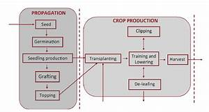 Partial Production Flow Diagram For Greenhouse Tomatoes