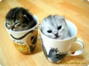 sprã che zum 50 hochzeitstag pictures of puppies kittens baby animals pics of kittens beautiful kitten