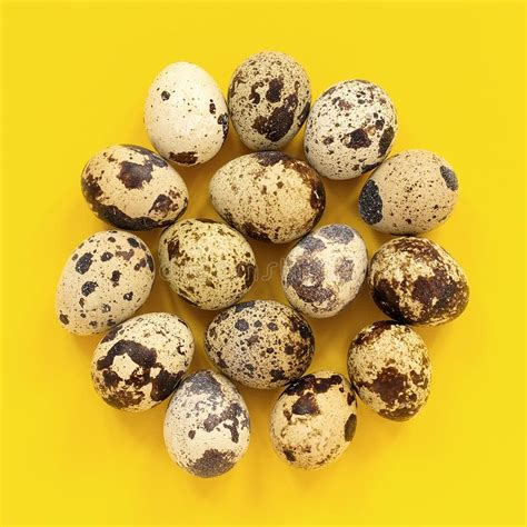 Post your logo, text, and other important information. Quail Eggs In Cardboard Box On Yellow Paper Background ...