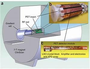 Pet Insert Inside A Small Animal Mri Scanner  A  The Mri