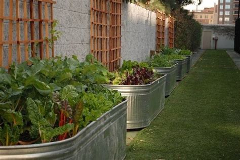 galvanized cattle trough raised garden beds  time