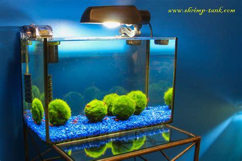 pets  rants good cold water plants   axolotl tank