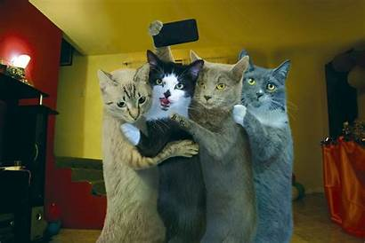 Cat Funny Selfie Cats Taking Backgrounds Wallpapers