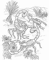 Coloring Scorpion Printable sketch template