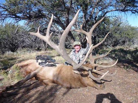 image gallery huge elk
