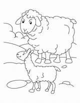 Sheep Coloring Pages Printable Everfreecoloring Preschool sketch template