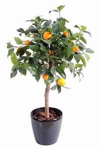 Gros Pot Pour Olivier : arbre en pot pour une glycine il faut un gros pot paris c t jardin arbres en pot arbres et ~ Melissatoandfro.com Idées de Décoration