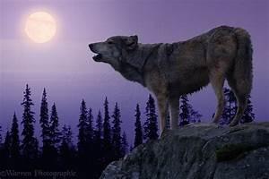 Wolf Howling At The Moon Wallpaper - WallpaperSafari