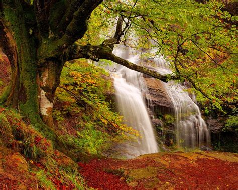 Forest Waterfall Wide Desktop Background : Wallpapers13.com