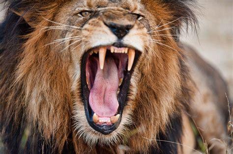 dangerous animals  africa