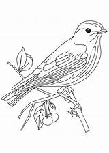 Bluebird Eastern Coloring Pages Bird Printable Adults sketch template