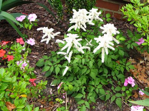 perennial flowers for shade views from the garden maintenance free perennial flowers for shade