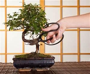Pflege Bonsai Baum Indoor : zimmerpflanzen ~ Michelbontemps.com Haus und Dekorationen