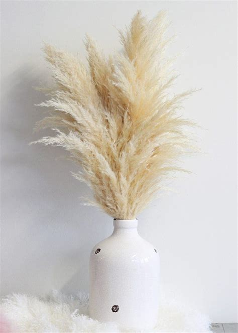 dried pampas grass  natural color stems  bunch