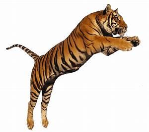 Tiger Jumping transparent png image