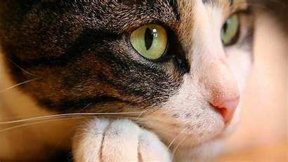 Cat 3d Wallpapers Eyes Wallpapersafari