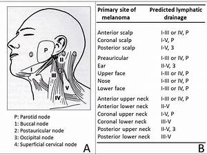 Lymph Glands And Lymphatic Vessels Of Head And Neck