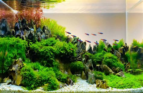 Aquascaping Supplies aquascaping supplies beginner s guide updated 2019
