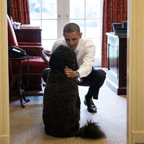 obama bo barack dog president souza pete pet friend friends reliever stress chief huffpost