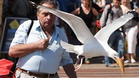 50 Most Perfectly Timed Photos Ever Captured - YouTube