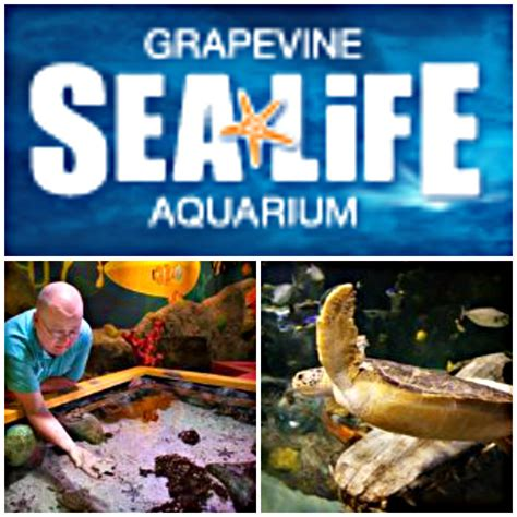 ad go free to grapevine sea aquarium coupon