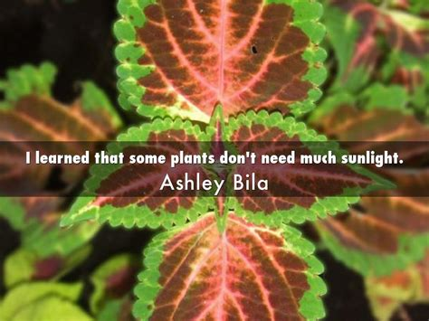 desk plants that don t need sunlight indoor plants that dont need sun home mansion