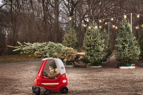 little boy with christmas tree on top of toy car sandra