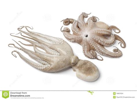 pair  fresh raw octopus stock images image