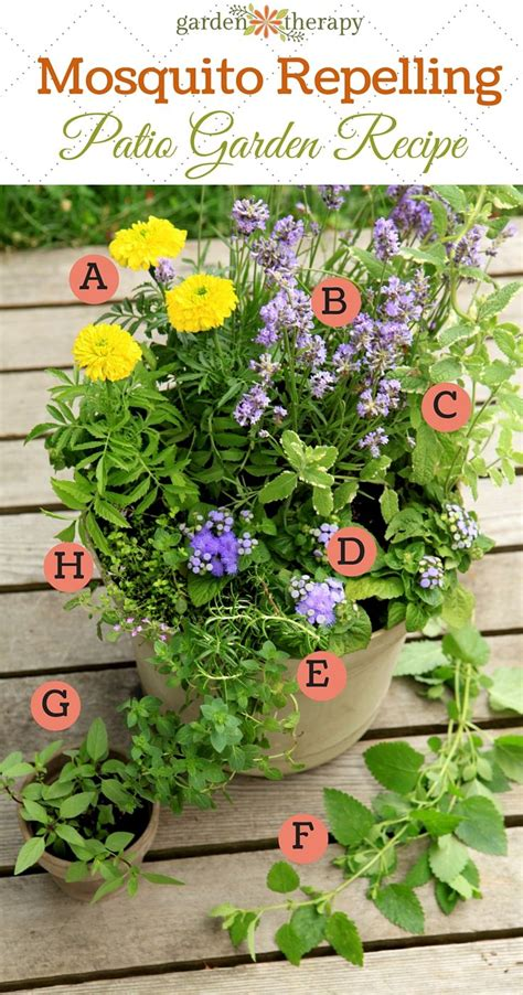 container recipes mosquito repelling container garden recipe this recipe was created for a location that gets at