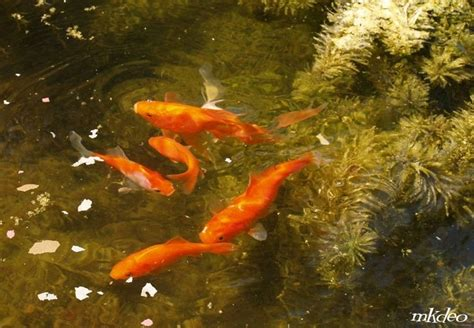 poisson en de mourir de faim aquariums et vivariums forum animaux
