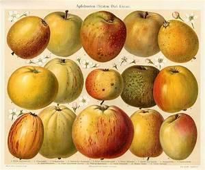 Zimmerpflanzen Alte Sorten : 11 besten obst im garten bilder auf pinterest alte ~ Michelbontemps.com Haus und Dekorationen