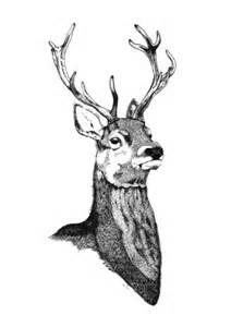 Stag Deer Head Drawings