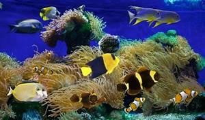 Coole Aquarium Deko : die besten 25 meeresfische ideen auf pinterest mandarinfische tropische fische und sch ner fisch ~ Markanthonyermac.com Haus und Dekorationen