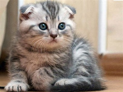 Image result for KUCING