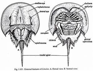 Alaskan Arthropoda Diagram