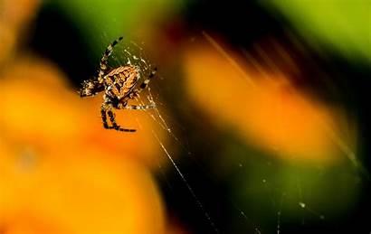 Gambar Pxhere Laba Bunga Spider Fotografi Macro