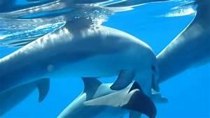 Schöne Delfin Bilder : gestern spiegelglattes meer und delfine ganz nah baby delfin mit familie ~ Frokenaadalensverden.com Haus und Dekorationen