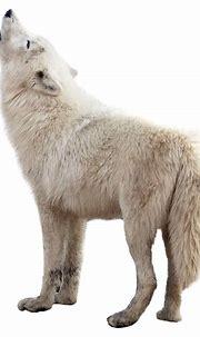 Wolf PNG Image - PurePNG | Free transparent CC0 PNG Image ...