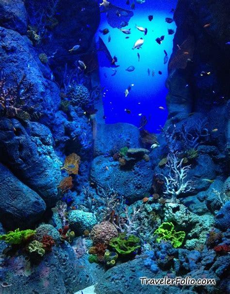 Marine Life Park Worlds Largest Oceanarium Rwsentosa