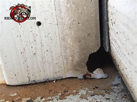 garage doors rome ga mouse alpharetta roswell columbus